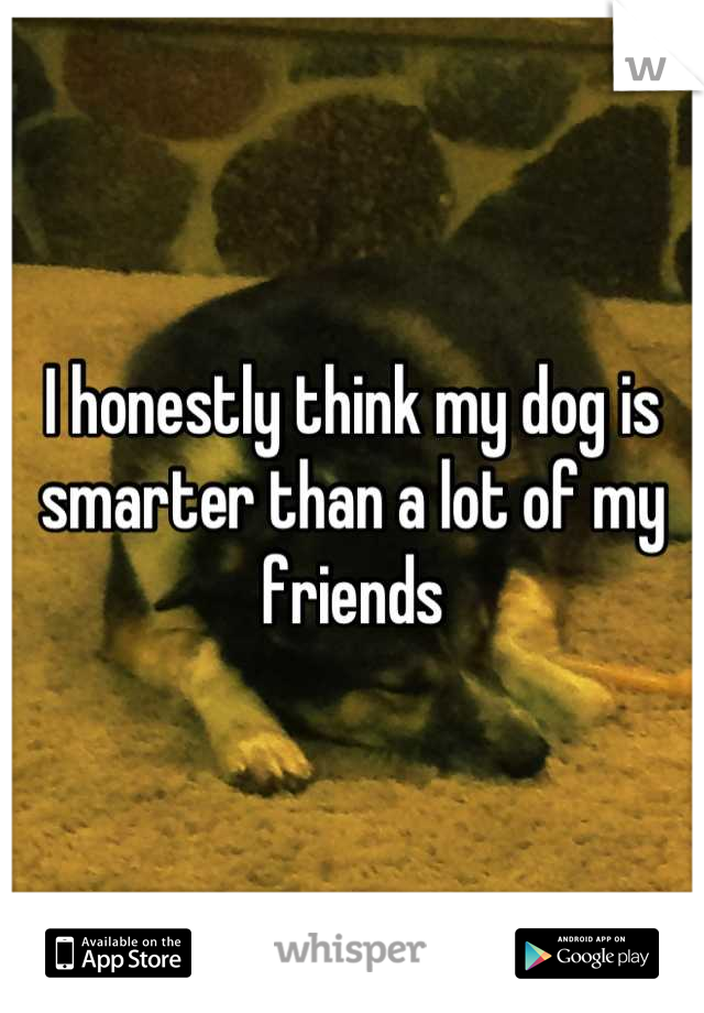 I honestly think my dog is smarter than a lot of my friends
