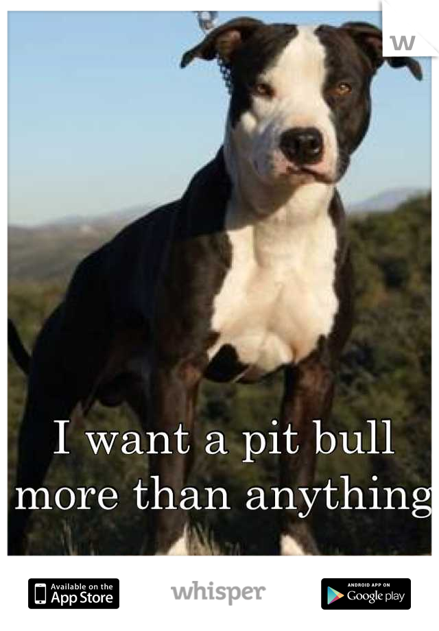 I want a pit bull more than anything