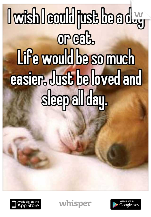 I wish I could just be a dog or cat.  Life would be so much easier. Just be loved and sleep all day.