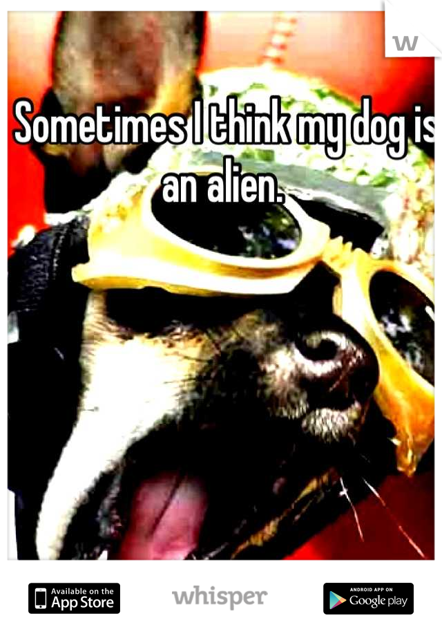Sometimes I think my dog is an alien.