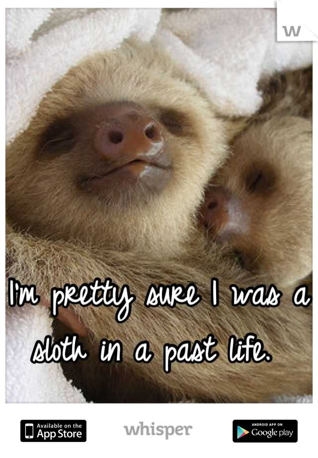 I'm pretty sure I was a sloth in a past life.