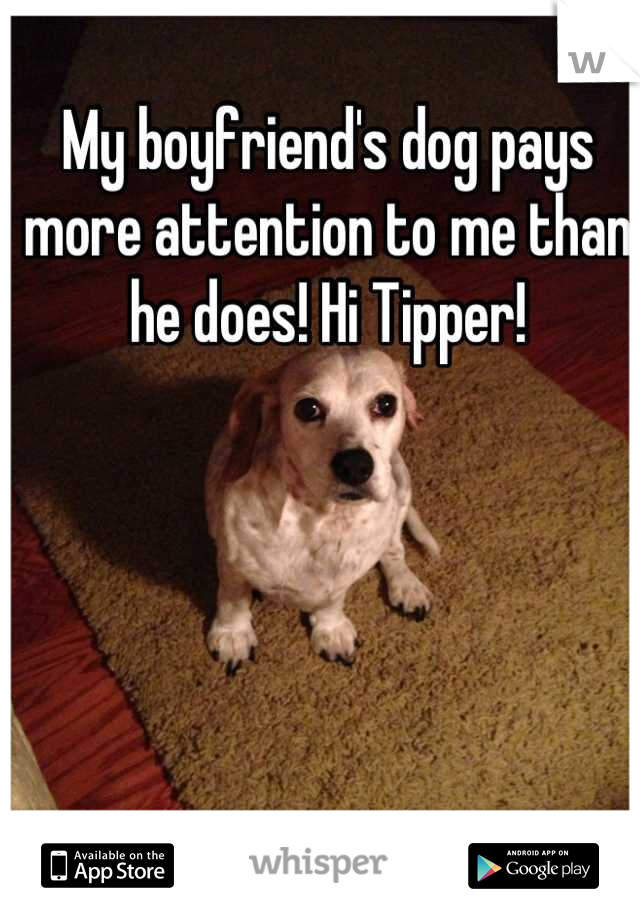 My boyfriend's dog pays more attention to me than he does! Hi Tipper!