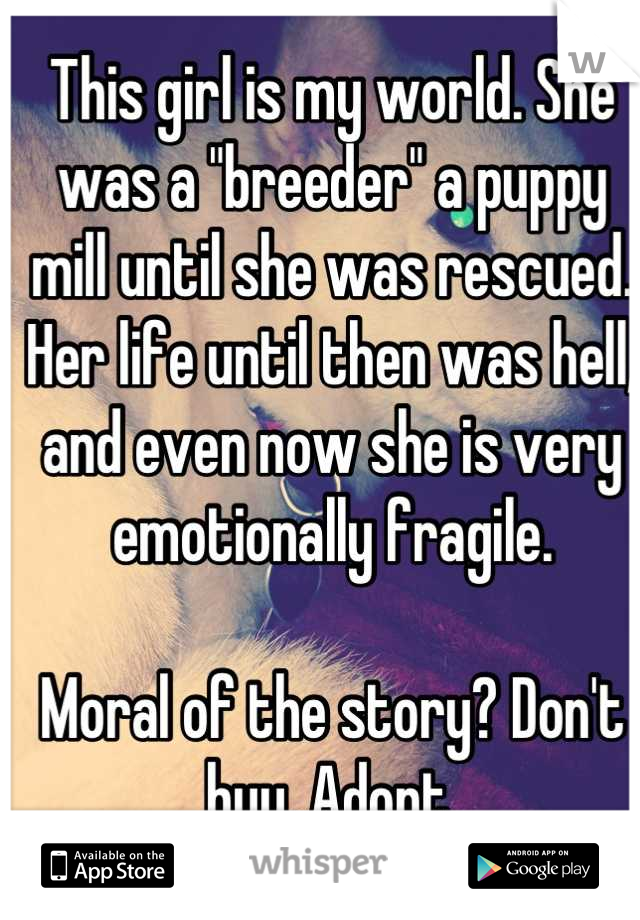 """This girl is my world. She was a """"breeder"""" a puppy mill until she was rescued. Her life until then was hell, and even now she is very emotionally fragile.  Moral of the story? Don't buy. Adopt."""