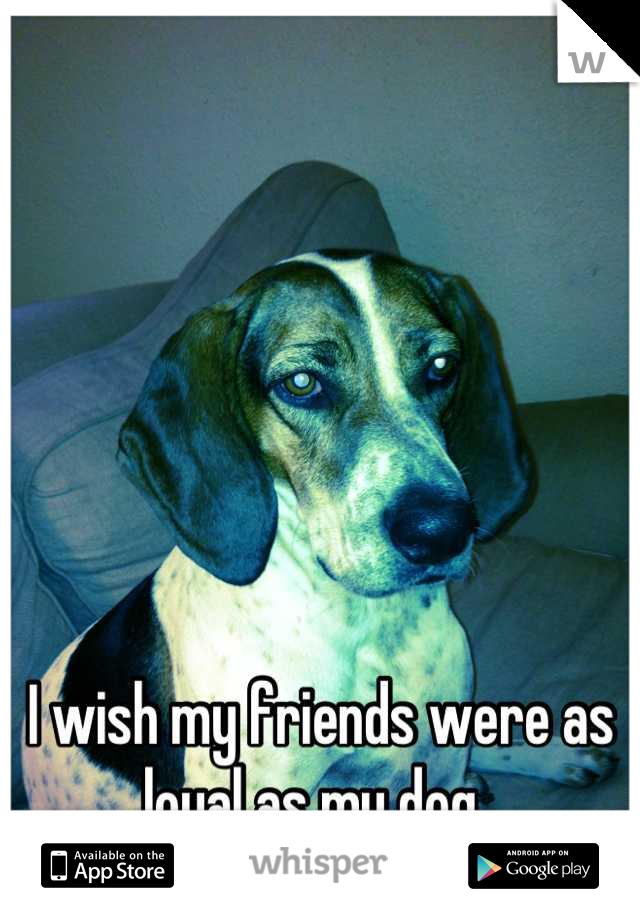 I wish my friends were as loyal as my dog.