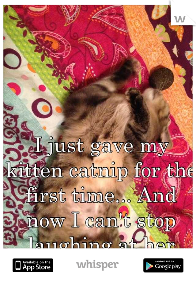 I just gave my kitten catnip for the first time... And now I can't stop laughing at her
