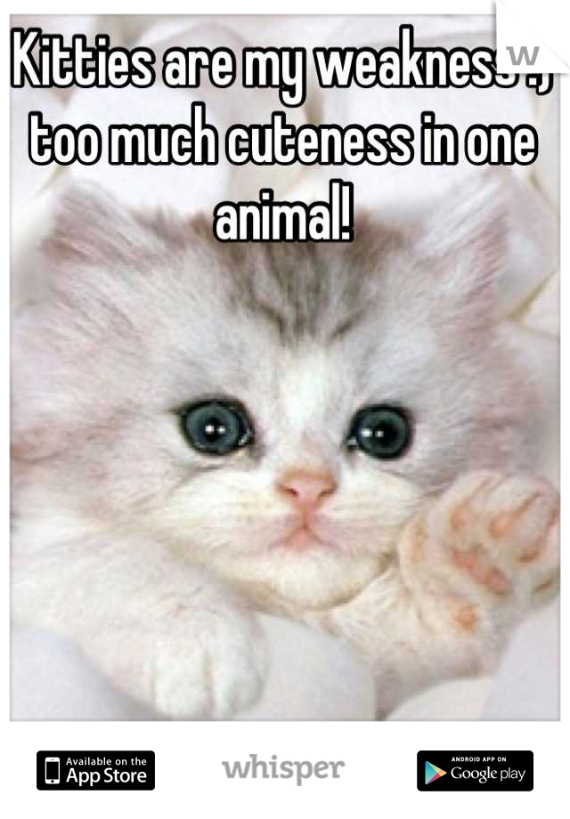 Kitties are my weakness :) too much cuteness in one animal!