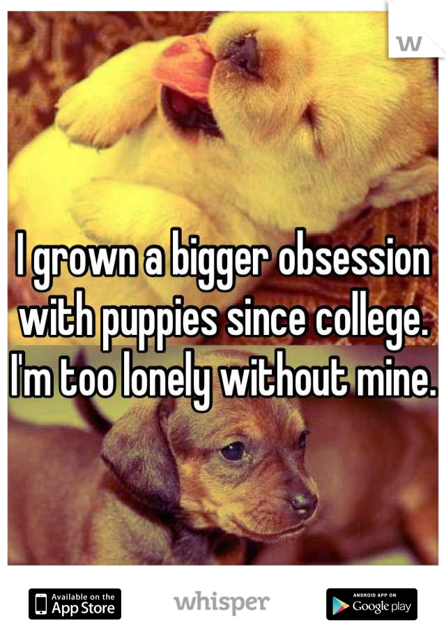 I grown a bigger obsession with puppies since college. I'm too lonely without mine.