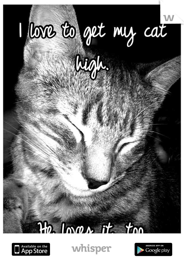 I love to get my cat high.     He loves it, too.