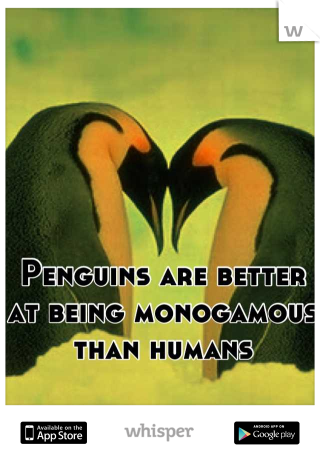 Penguins are better at being monogamous than humans