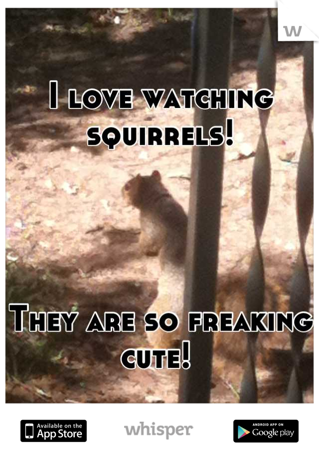 I love watching squirrels!     They are so freaking cute!