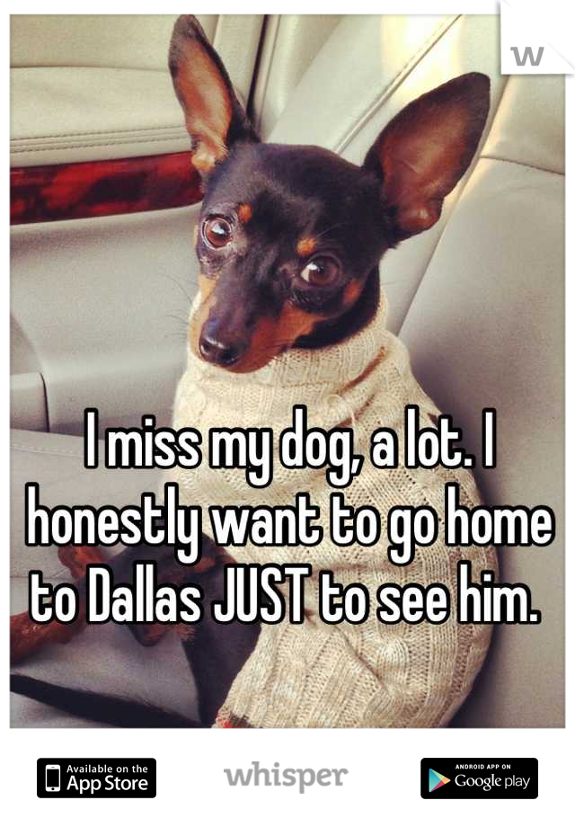 I miss my dog, a lot. I honestly want to go home to Dallas JUST to see him.