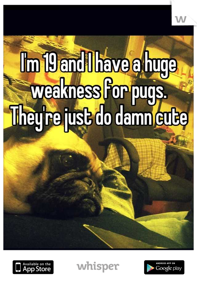 I'm 19 and I have a huge weakness for pugs. They're just do damn cute