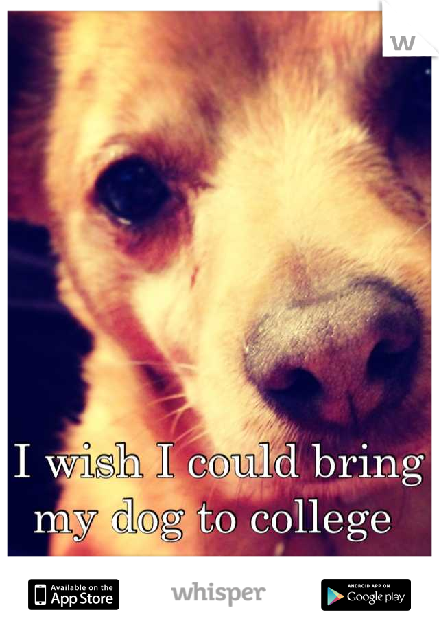 I wish I could bring my dog to college