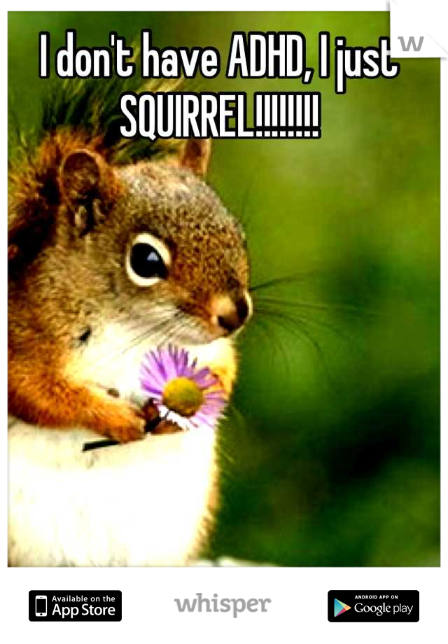 I don't have ADHD, I just SQUIRREL!!!!!!!!