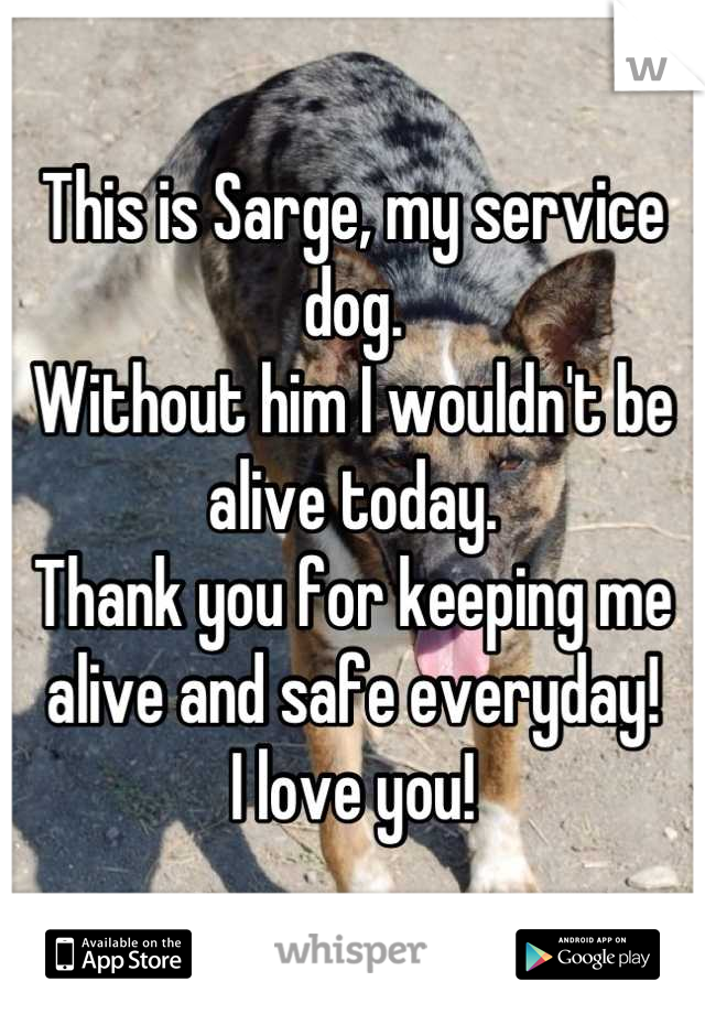 This is Sarge, my service dog. Without him I wouldn't be alive today. Thank you for keeping me alive and safe everyday! I love you!