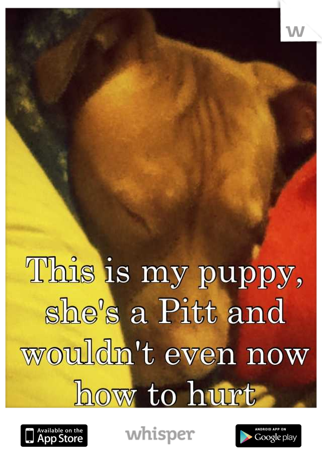 This is my puppy, she's a Pitt and wouldn't even now how to hurt someone.