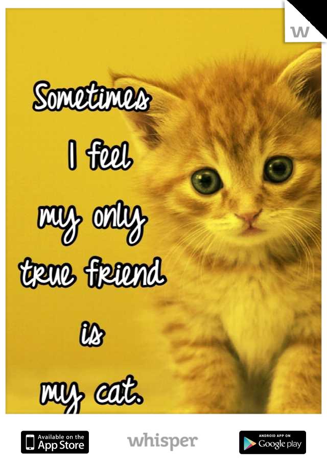 Sometimes  I feel  my only true friend  is my cat.