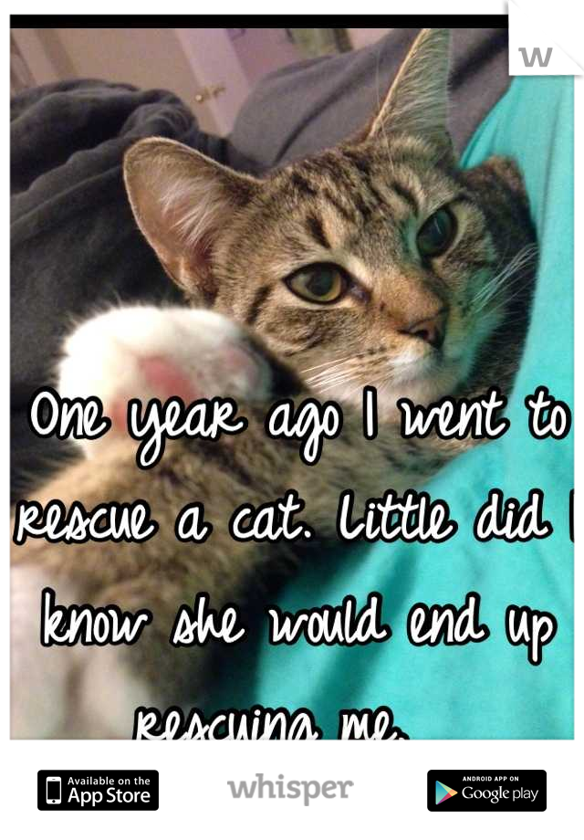 One year ago I went to rescue a cat. Little did I know she would end up rescuing me.
