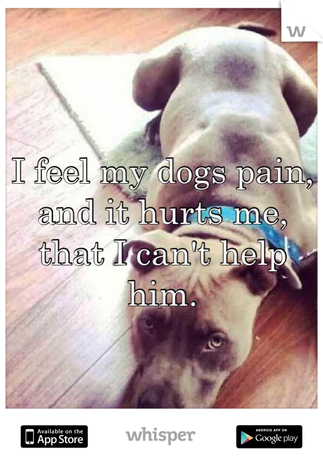 I feel my dogs pain, and it hurts me, that I can't help him.