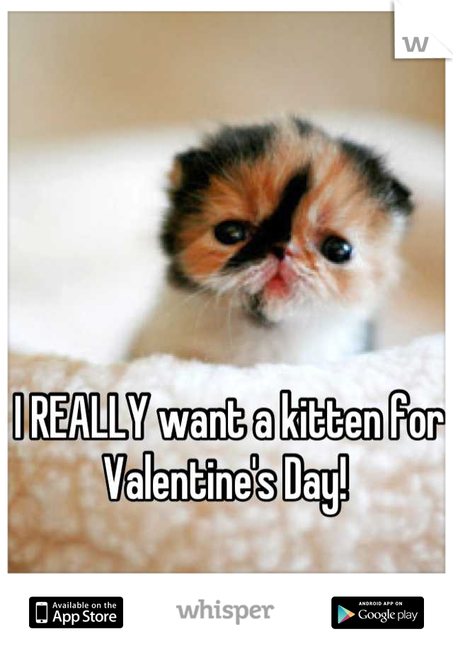 I REALLY want a kitten for Valentine's Day!