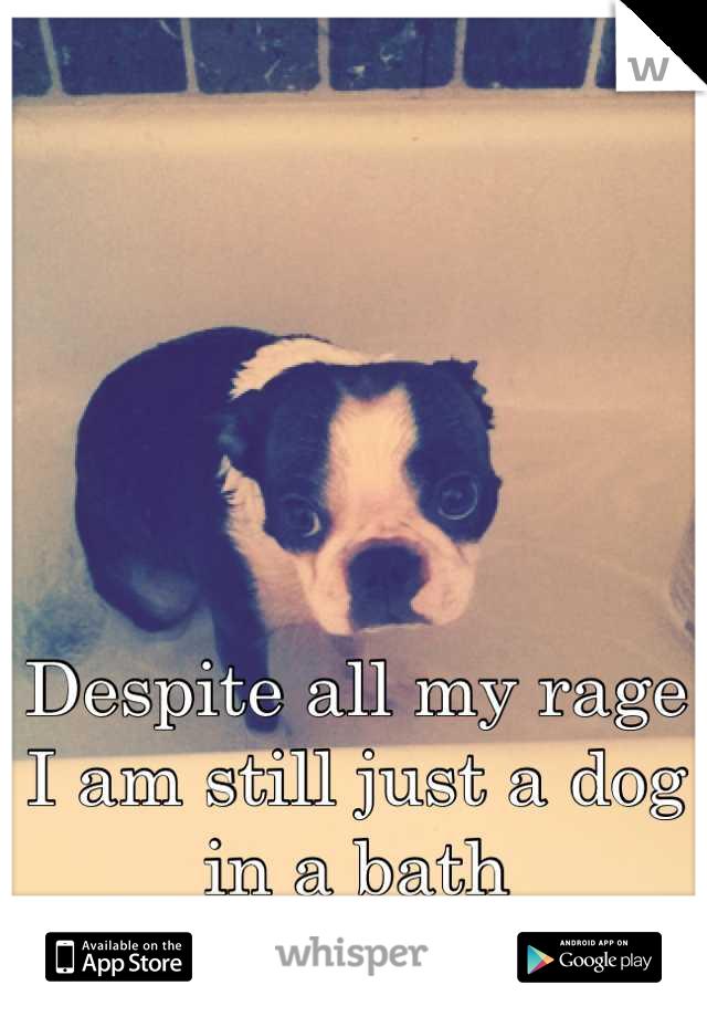 Despite all my rage I am still just a dog in a bath