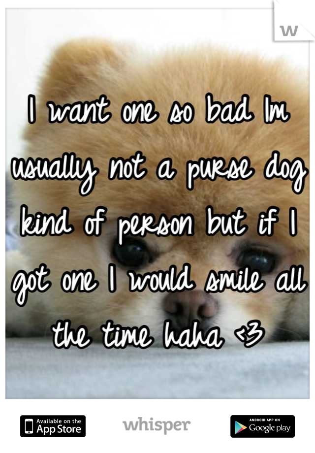 I want one so bad Im usually not a purse dog kind of person but if I got one I would smile all the time haha <3