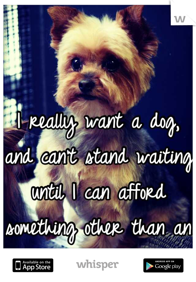 I really want a dog, and can't stand waiting until I can afford something other than an apartment...