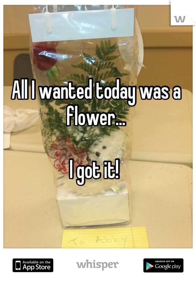 All I wanted today was a flower...   I got it!