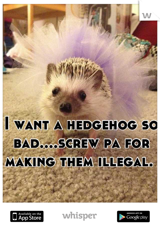I want a hedgehog so bad....screw pa for making them illegal.