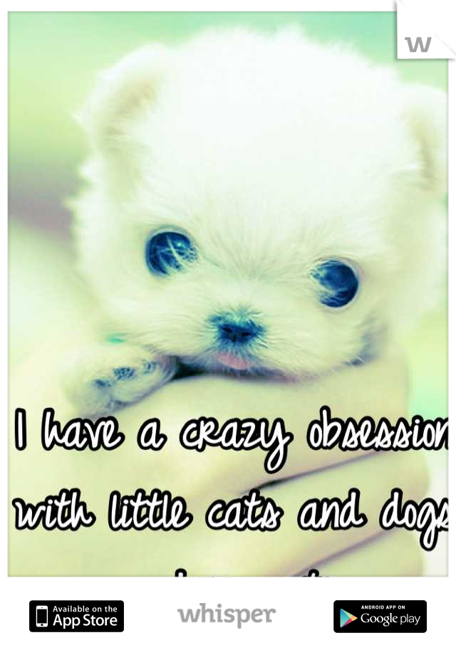 I have a crazy obsession with little cats and dogs so darn cute