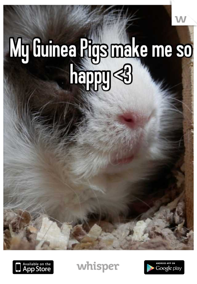 My Guinea Pigs make me so happy <3