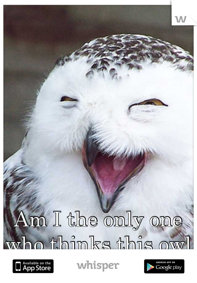 Am I the only one who thinks this owl looks hilarious? Lol