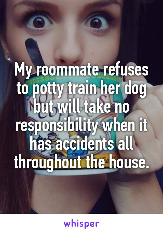 My roommate refuses to potty train her dog but will take no responsibility when it has accidents all throughout the house.