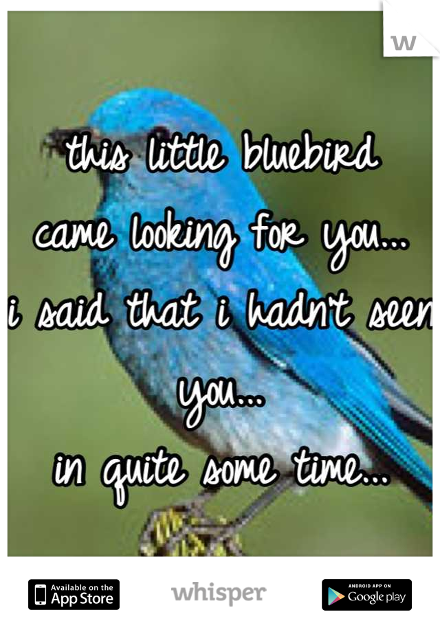 this little bluebird came looking for you... i said that i hadn't seen you... in quite some time...