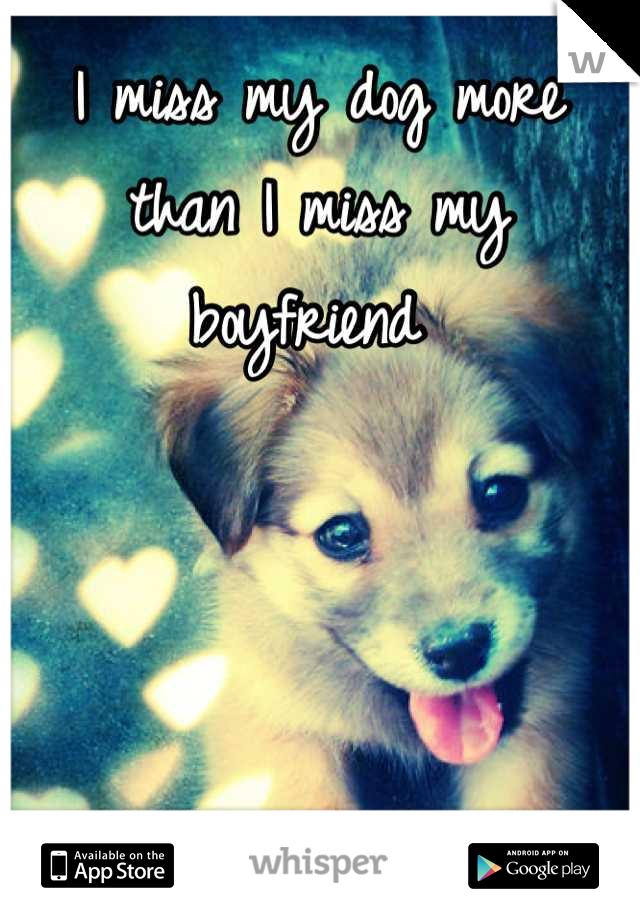 I miss my dog more than I miss my boyfriend