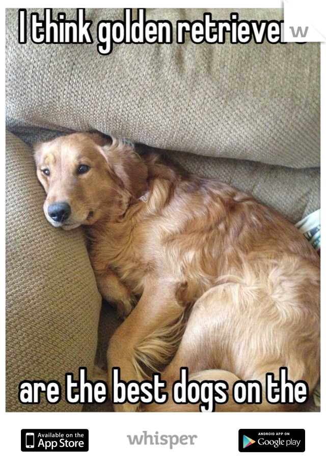 I think golden retrievers        are the best dogs on the planet.