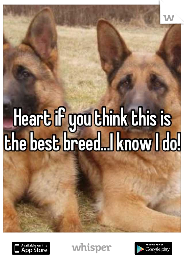 Heart if you think this is the best breed...I know I do!