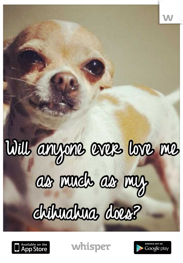Will anyone ever love me as much as my chihuahua does?