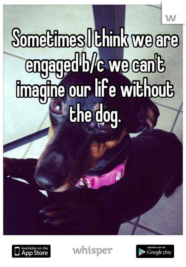 Sometimes I think we are engaged b/c we can't imagine our life without the dog.