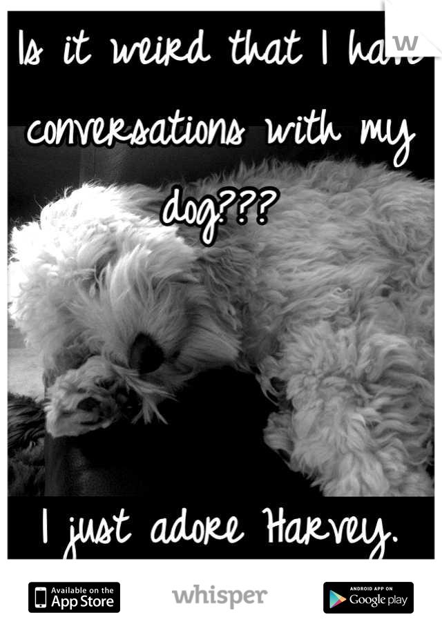 Is it weird that I have conversations with my dog???                                                                                             I just adore Harvey.