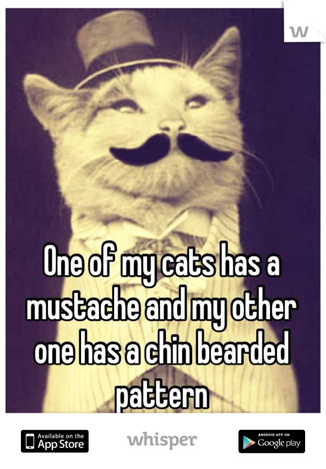 One of my cats has a mustache and my other one has a chin bearded pattern