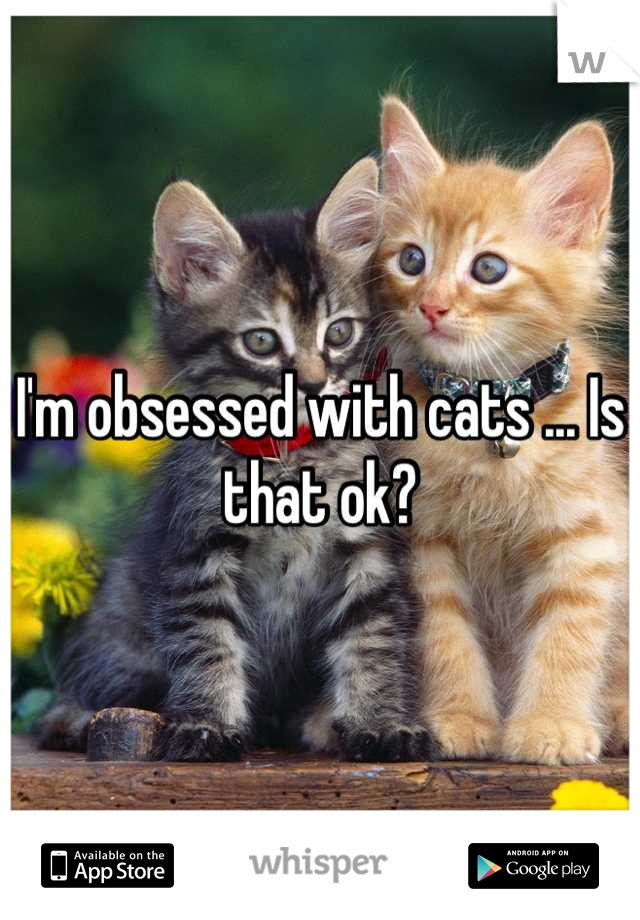 I'm obsessed with cats ... Is that ok?