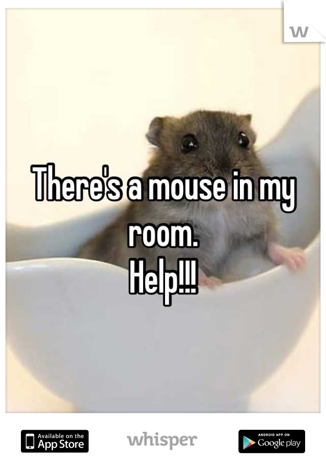 There's a mouse in my room.  Help!!!