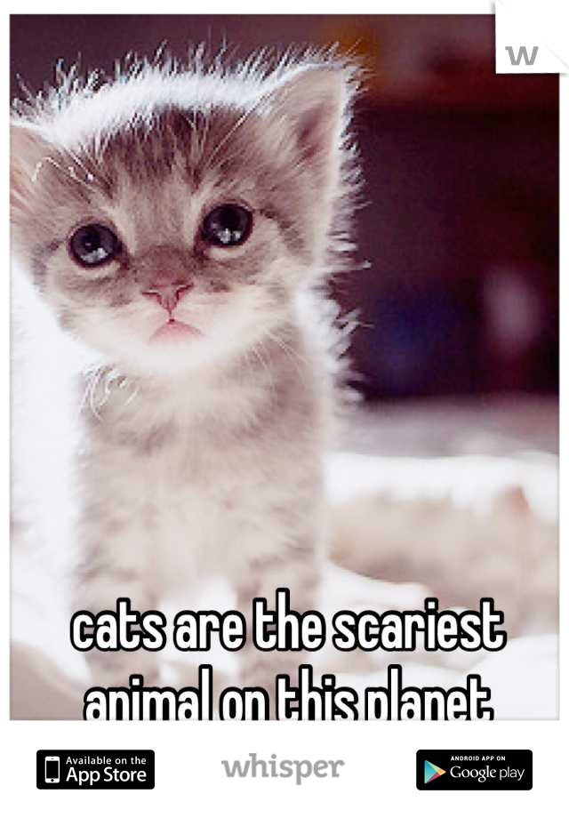 cats are the scariest animal on this planet