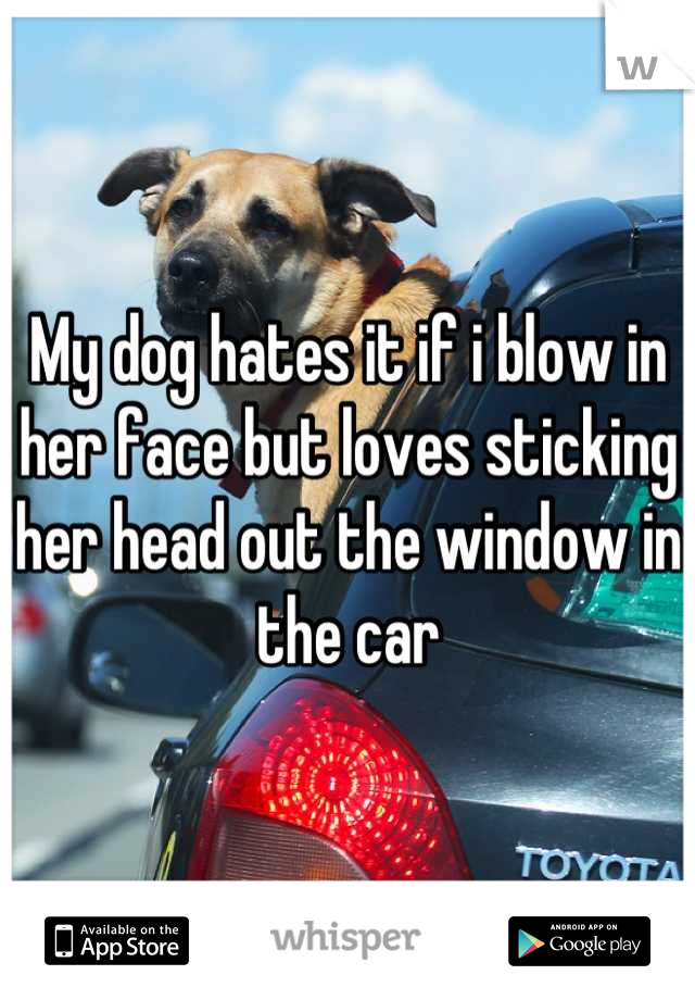 My dog hates it if i blow in her face but loves sticking her head out the window in the car