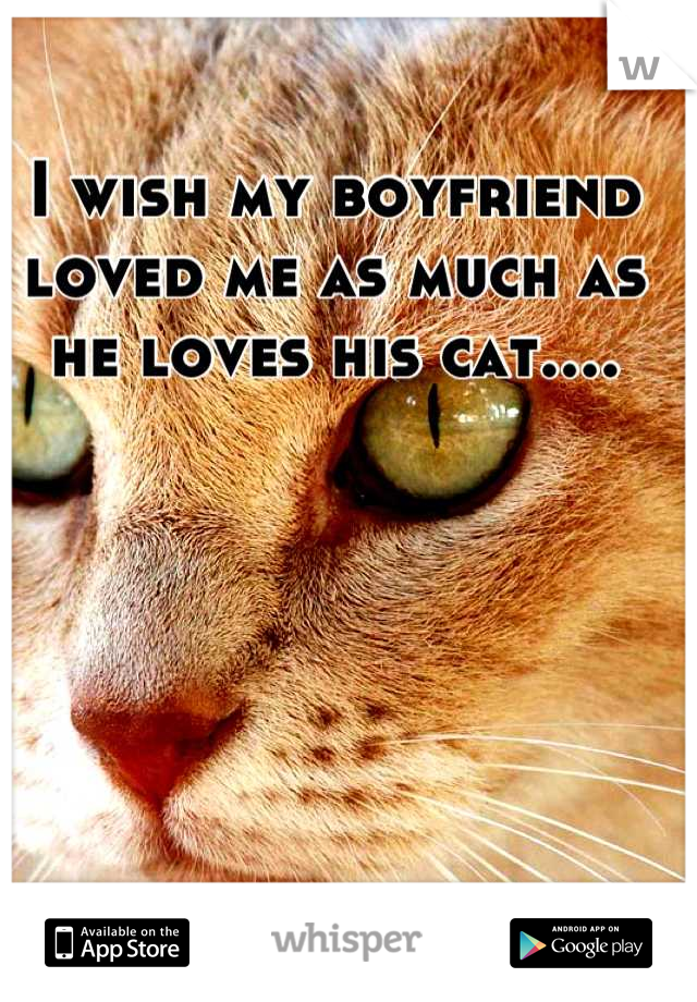 I wish my boyfriend loved me as much as he loves his cat....
