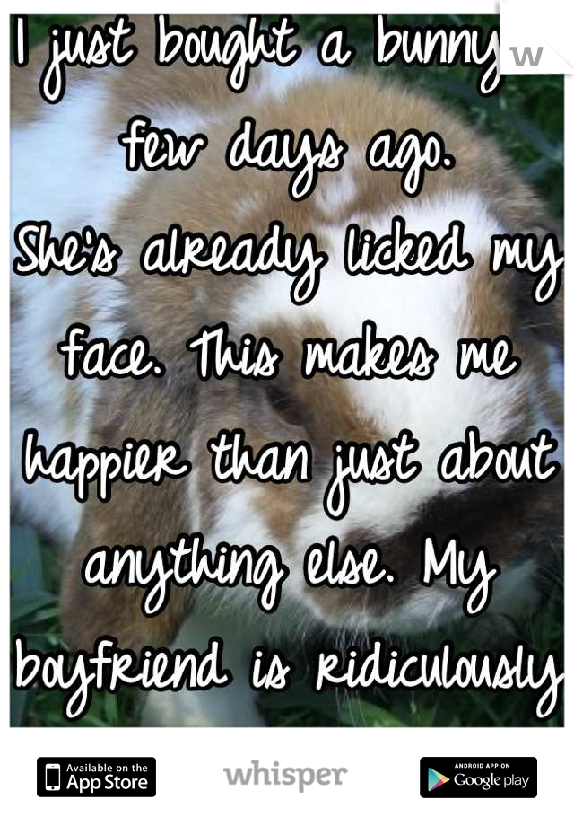 I just bought a bunny a few days ago. She's already licked my face. This makes me happier than just about anything else. My boyfriend is ridiculously jealous of her.