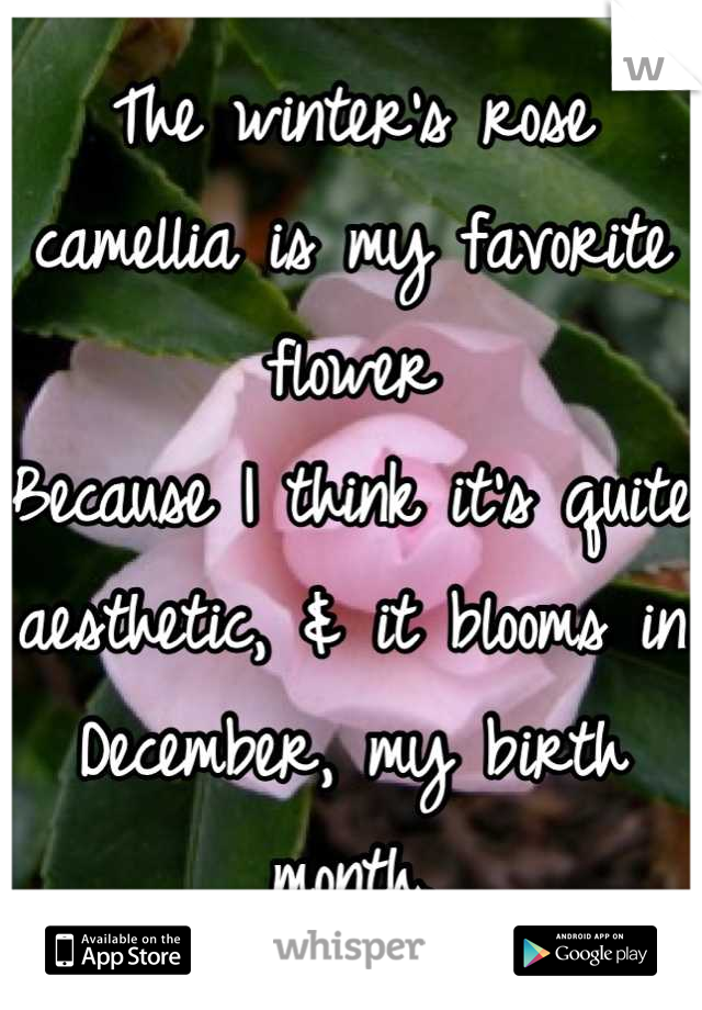 The winter's rose camellia is my favorite flower Because I think it's quite aesthetic, & it blooms in December, my birth month.