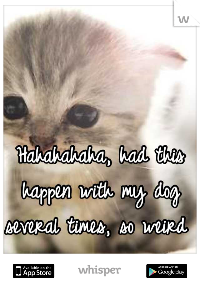 Hahahahaha, had this happen with my dog several times, so weird
