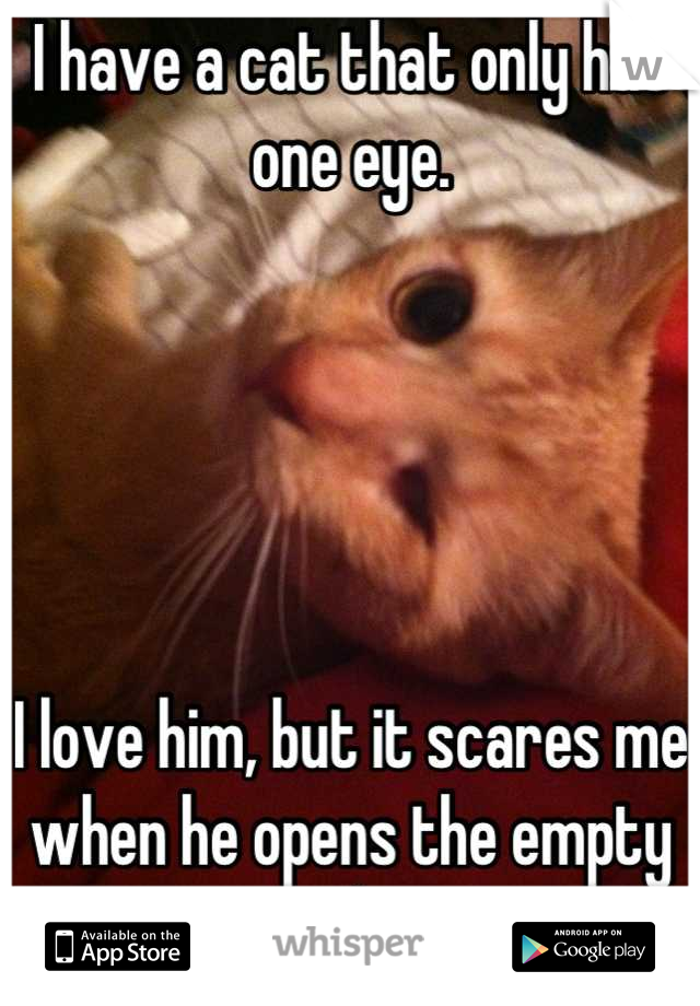 I have a cat that only has one eye.      I love him, but it scares me when he opens the empty socket